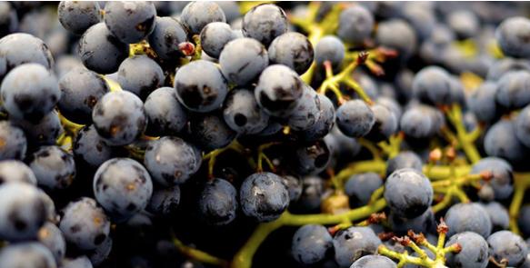 ¿Quiere aprender cómo crear un buen vino? Repasemos los detalles
